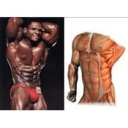 Packs Body Building